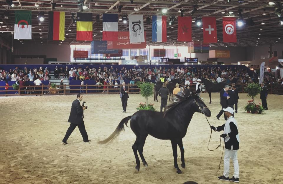Le salon du cheval d 39 el jadida a gagn une notori t for Place salon du cheval